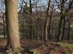 woods lantern pike