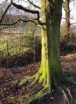 Tree sett valley trail