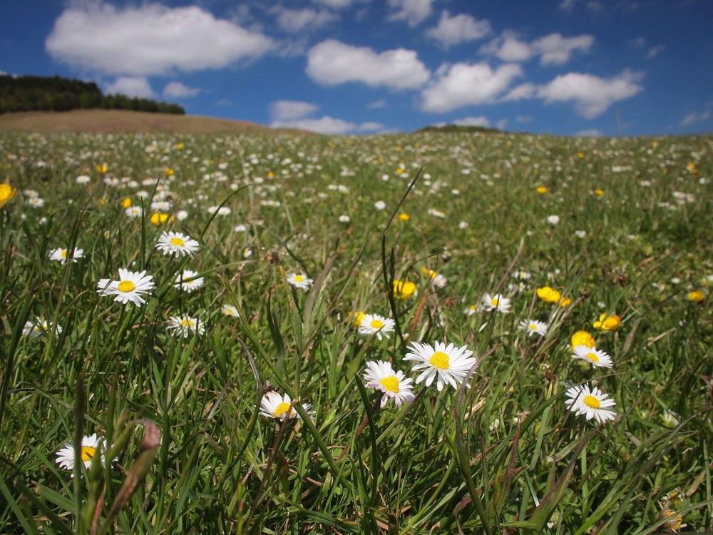 flowers-northumberland